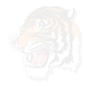 tiger background on white