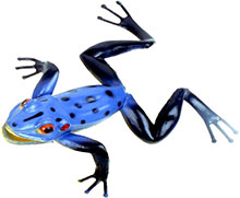 toy frog blue