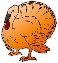 turkey standing
